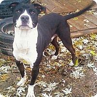Adopt A Pet :: Orie - Toledo, OH