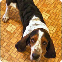 Adopt A Pet :: Fausto - Phoenix, AZ