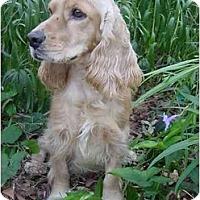 Adopt A Pet :: Levi - Sugarland, TX