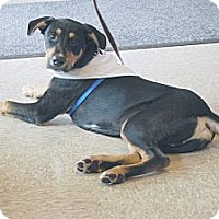 Adopt A Pet :: Troy - Minneola, FL