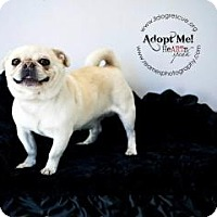 Adopt A Pet :: Moses - Shawnee Mission, KS