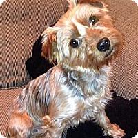 Adopt A Pet :: Blossom - Carmine, TX