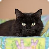 Adopt A Pet :: Fiona - Fountain Hills, AZ