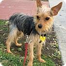 Adopt A Pet :: Esko