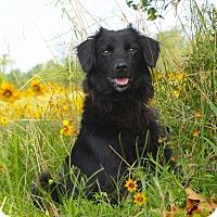 Adopt A Pet :: *Chrissy - PENDING - Westport, CT