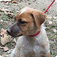 Adopt A Pet :: Gingko - Chicago, IL