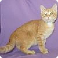 Adopt A Pet :: Ernie - Powell, OH