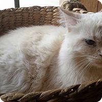 Adopt A Pet :: Kharmon - Ennis, TX