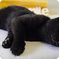 Adopt A Pet :: POE - Sandusky, OH
