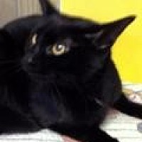 Adopt A Pet :: Bristol - Porter, TX