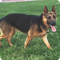 Adopt A Pet :: Turbo - Pleasant Grove, CA