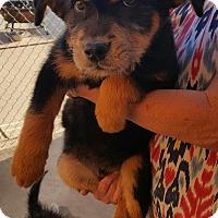 Adopt A Pet :: Thor - Temecula, CA