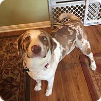 Adopt A Pet :: A369139 Tina - San Antonio, TX