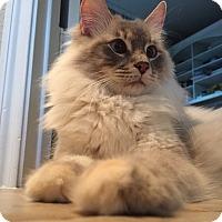 Adopt A Pet :: Peep - Ennis, TX