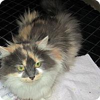 Adopt A Pet :: Heidi - Jeffersonville, IN