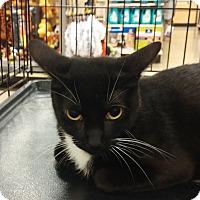 Adopt A Pet :: Siren - Warrenton, MO