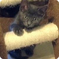 Adopt A Pet :: Ashley - Orlando, FL