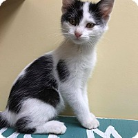 Adopt A Pet :: Will - Maryville, MO