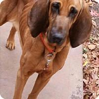 Adopt A Pet :: EllieMae - Woodstock, GA