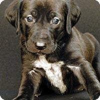 Hound (Unknown Type) Mix Puppy for adoption in Newland, North Carolina - Arrieta