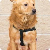 Adopt A Pet :: Buddy Boy - Santa Fe, TX