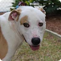 Adopt A Pet :: Hercules - Brunswick, GA