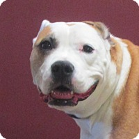 Adopt A Pet :: Butterscotch - LaGrange, KY