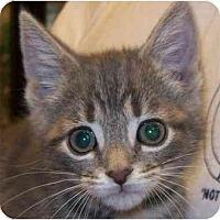 Adopt A Pet :: Phoenix - Annapolis, MD