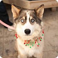Adopt A Pet :: Mercy - Saskatoon, SK