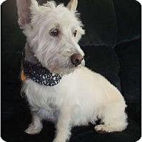 Adopt A Pet :: Mac - Mooy, AL