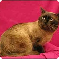 Adopt A Pet :: Azul - Sacramento, CA