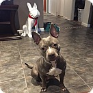 Adopt A Pet :: Misti