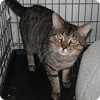Adopt A Pet :: Bogart - Herndon, VA