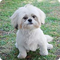 Adopt A Pet :: MACKENZI - Los Angeles, CA