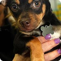 Adopt A Pet :: Mocha - Detroit, MI