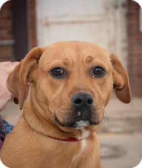 Hound (Unknown Type) Mix Puppy for adoption in Oxford, North Carolina - Kim Kardashian