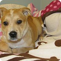 Adopt A Pet :: Tizzy - Groton, MA