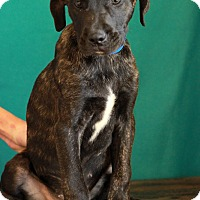 Adopt A Pet :: Diego - Waldorf, MD