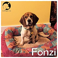 Adopt A Pet :: Fonzi - Novi, MI