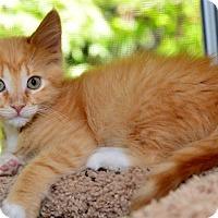 Adopt A Pet :: Betsy - Davis, CA