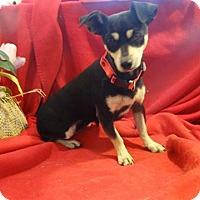 Adopt A Pet :: Trixie - Vacaville, CA