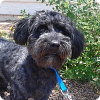 Adopt A Pet :: Mac - Las Vegas, NV