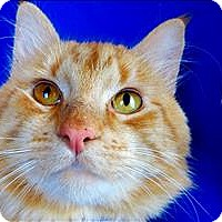 Adopt A Pet :: Holliday - Sherwood, OR