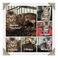 Adopt A Pet :: Duchess & Kittens - Marietta, OH