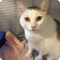 Adopt A Pet :: JoAnna - Hanna City, IL