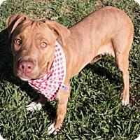 Adopt A Pet :: FIDO - Houston, TX