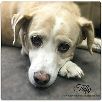 Beagle Mix Dog for adoption in Pascagoula, Mississippi - Taffy