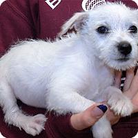 Adopt A Pet :: JACK - Corona, CA
