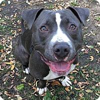 Adopt A Pet :: Ozzy - Oak Park, IL