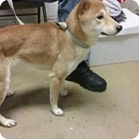 Adopt A Pet :: Harmony - Menands, NY